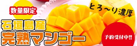 石垣島産完熟マンゴー